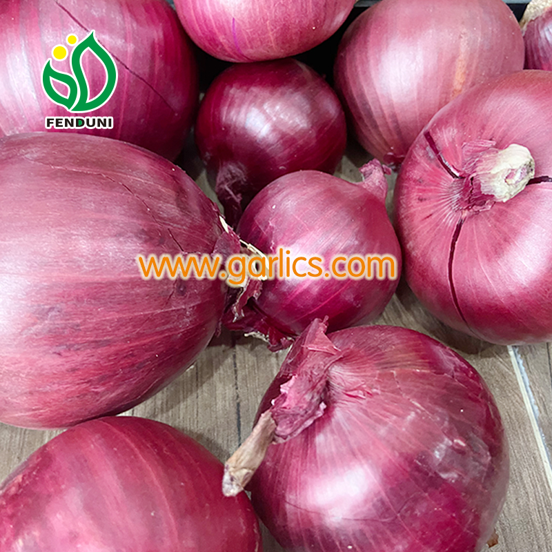 Top 6 Onion Exporters