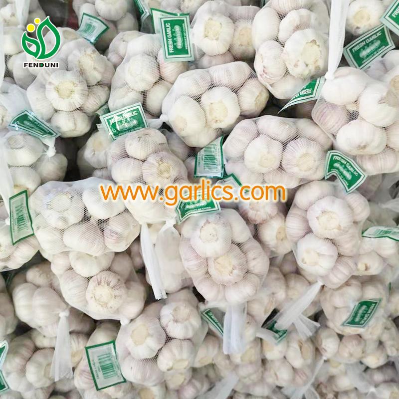 garlic-importers