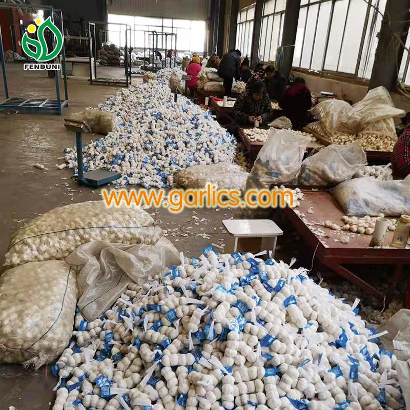 Top Seven Garlic Buyers in Kenya