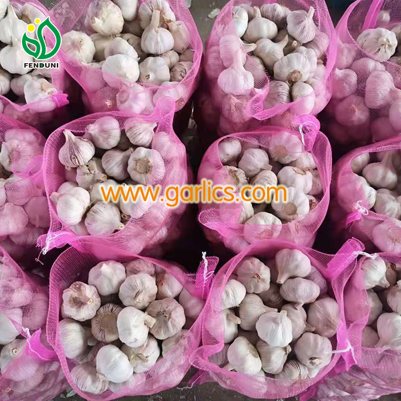 buy garlic bulbs for planting
