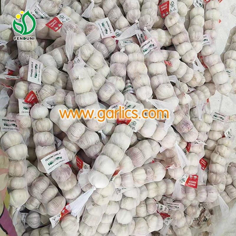 buy garlic bulbs for planting