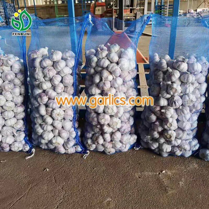 Top 10 Garlic Importers and Garlic Buyers in Malaysia