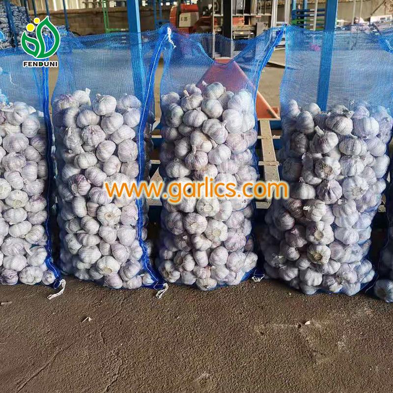 garlic Importers in Malaysia