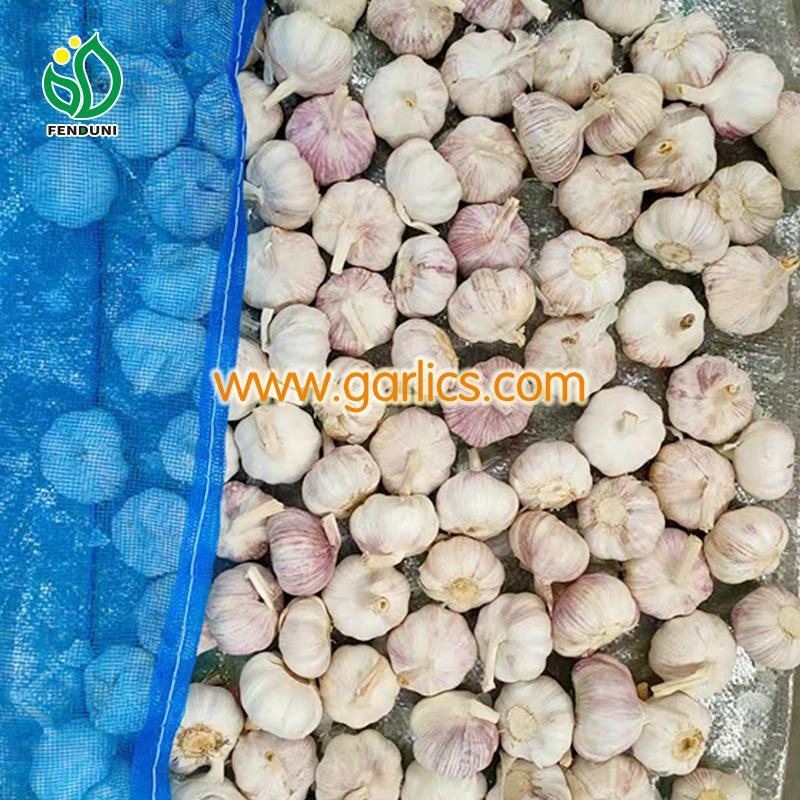 Garlic Buyers in Kenya