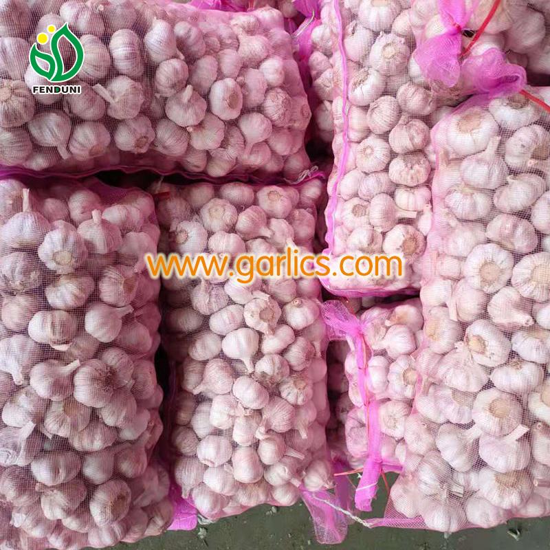 Changes in Garlic Wholesale Price in Chennai