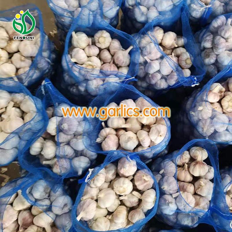 Garlic Wholesale Price in Chennai