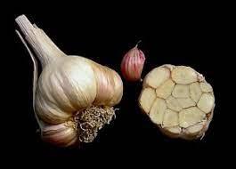 Silveskin garlic