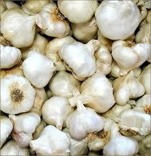 california softneck garlic